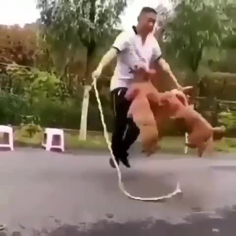 Skipping with Dogs